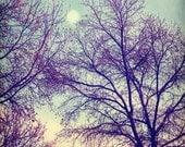 moon trees woodland plum lavender mint green yellow bare branches  8x8 art print  - Moon Glow