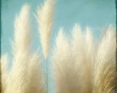 Nature Photography, Botanical Art Print, Beach Grass, Ornamental, Feathery, Home Decor,  Blue, Teal, Aqua, Sky  - Soft