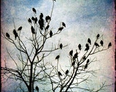 Flock birds crow tree black bare branches 8x8 - Lofty Perches