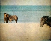 Horse Photograph, Wild Horses on Beach, Ocean, Sand, Summer, Beach Cottage Decor, Spanish Mustangs, Outer Banks, OBX - Wild Ones