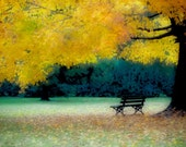 Fall Photograph, Autumn Trees Photography, Fall Print, Yellow Orange Leaves, Park Bench, 8x8, 10x10, 12x12 - She Remembers a Time