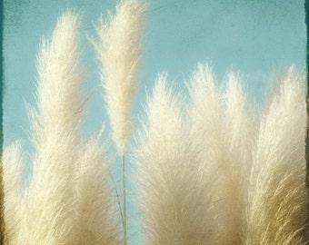 Nature Photography, Botanical Art Print, Nature Wall Art, Beach Sea Grass Art, Wild Pompas Grass, Feathery, Coastal Wall Decor - Soft