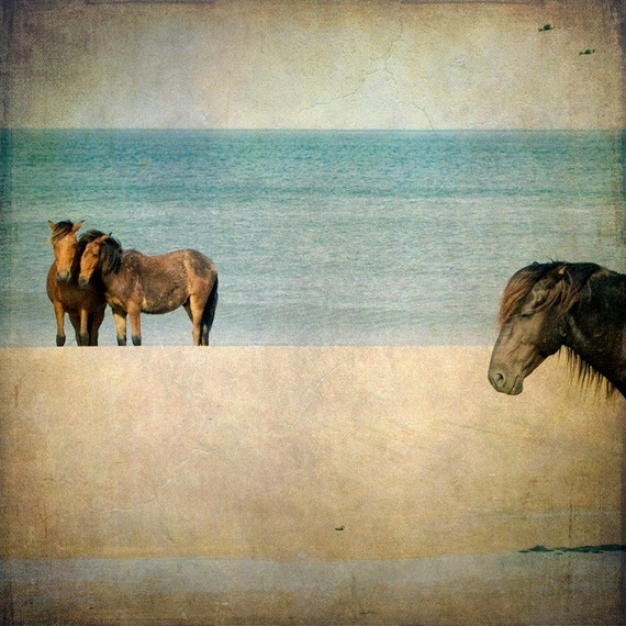 Horse Photograph, Wild Horses, Mustangs, Horse Art, Nature, Equine Art, Beach, Summer, Teal, Brown, Beach Cottage Decor  - Wild Ones