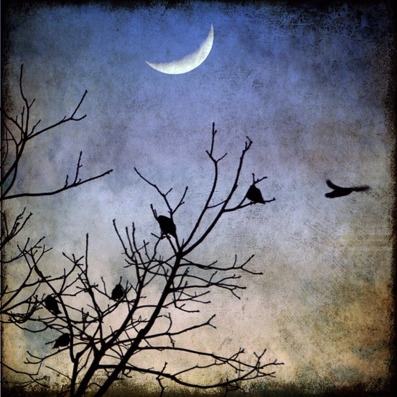 Birds crows crescent moon night fly flight sapphire blue evening  tree fine art print 16x16, 20x20 - Flying into the Night