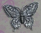 Silver Monarch Butterfly Finding 1187