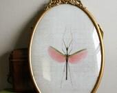 Antique Oval framed Pink Walking Stick