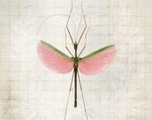 8x12 Pink Walking Stick - f2images