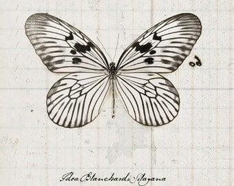 8x12 Rice Paper Butterfly