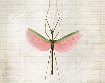 8x12 Pink Walking Stick