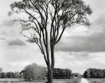 8x12 Lone Tree