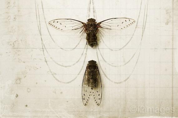 4x6 Cicada Pair