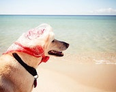 A Day at the Beach . whimsical pet portrait . beach photography . nursery art . childrens room art . dog photograph . cottage home decor