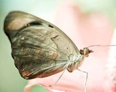 Dreamy pastel pink baby nursery wall art . cottage chic home decor . whimsical nature photography . butterfly print. Alight