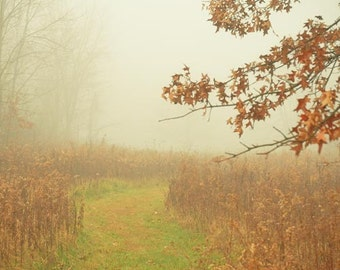 Autumn . fog landscape . tree photography . green rust brown. rustic. nature photography . Fine Art Photography . November . I Awoke to Fog