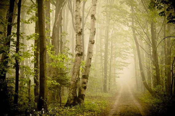 Dreamy green woodland print. Large photograph . nature photography . 16x20 . fairytale . fog .gray brown . woodland art Road Less Travelled