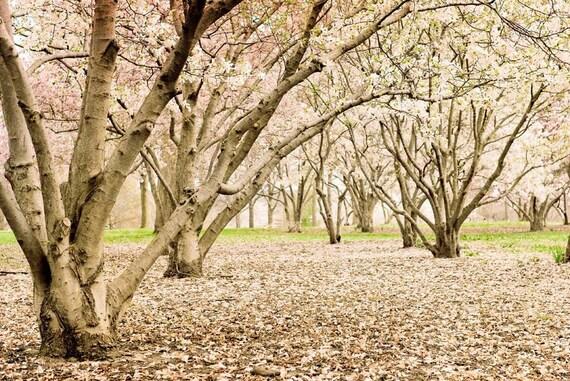 home decor . spring nature photography .landscape . pink wall art . modern rustic . spring wedding  . nursery art . garden tree romantic