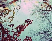 Autumn Leaves Photograph Reflection tree branches cyan red crimson blue sky 8x10 photo print