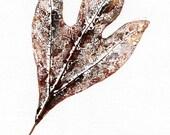 Fall Sassafras 2 a direct nature print by Robert Fagg hand pulled original leaf impression