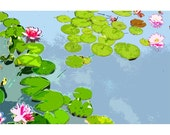 Waterlillies 2 - nature photography