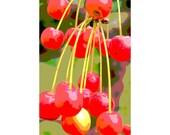 Cherries 3 - nature photography