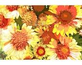Orange Flowers 1 - nature photography