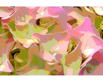 Hydrangea 3 - nature photography