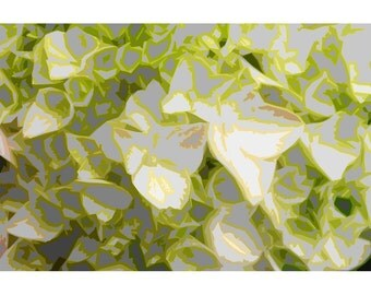 Hydrangea 1 - nature photography