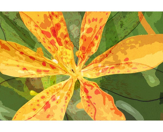 Leopard Lily 1 - nature photography