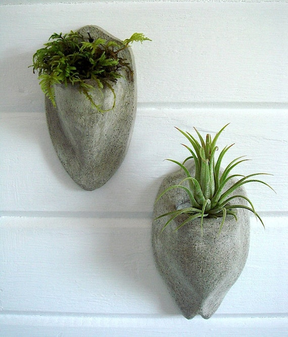 ZEN Mini Wall Pocket Concrete Sconce and Mexico AirPlant