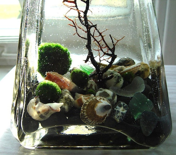 Live Marimo Balls in Tall Pyramid Bottle Concrete Top