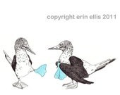 Blue-Footed Booby 5x7 Print