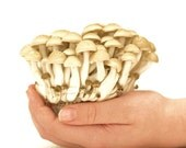 Handful of Fungi  Mushroom Print Daughter's Hand Holding Mushrooms Woodland Scene Forest Trees White Fall Autumn Mycology Mushrooms