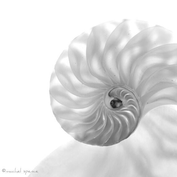 Chambered Nautilus Photograph...White Shell Affordable Nature Art Decor Seashell Nautilus Cephalopod Mollusk Tribal Life Shell