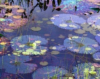 Fine Art Print, Giclee Archival Print, Photomontage, Collage, Painted Photographs, Lily Pads