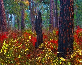 Autumn Forest, Trees, Bark, Landscape, Photograph, Fine Art Painted Photograph...Foliage and Bark...8x10 archival Giclee print