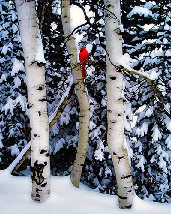 Trees, Birch, Birch Trees, Bird, Red Cardinal,