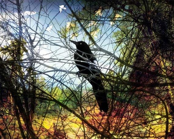 Nature, Fine Art Print, Giclee Archival Print, Photomontage, Collage, Painted Photographs, Home Decor, Wall Art, Bird, Garden