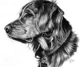 Retriever - 8x8 Art Print