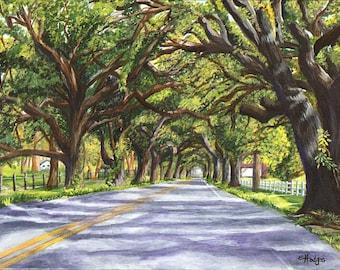 Docville Oaks 8  x 10 Print