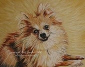 Pomeranian signed dog pet animal portrait painting print Donna Pellegata