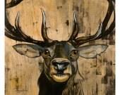 Francis the Elk (large print)
