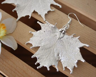 Medium Real Sugar Maple Leaf Earrings, Pendant Size Sterling Silver Earrings, LEP18