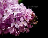 RESERVED LISTING FOR ALEX Lilacs 1 5x7 Fine Art Photograph