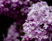 Lilacs 2 8x10 Fine Art Photograph