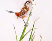 Bird Art Watercolor PRINT/ Small bird nature painting / Wildlife Marsh Wren realistic artwork / Earth tone color field/ Christmas Gift  B