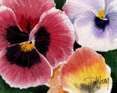 Pansies-Print from an original watercolor painting