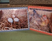 Chicken and Eggs Card Set