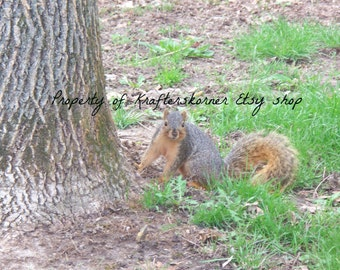 Photo Print Red Squirrel at Base of Tree 4 x 6, 5 x 7, or 8 x 10