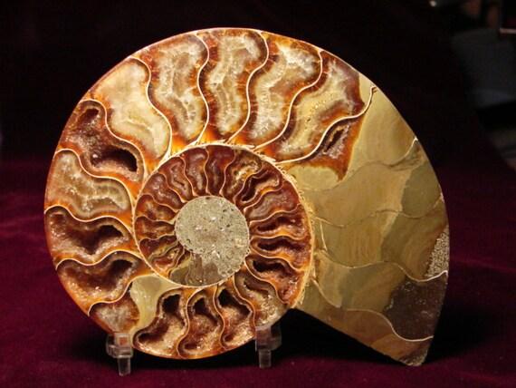 Opalized Ammonite display piece