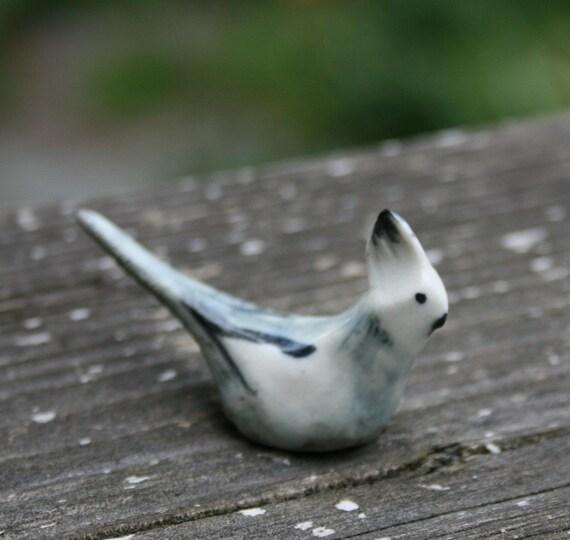 Male White-Face Cockatiel Miniature